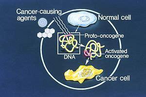 tumor suppressor genes tumor promoting genes oncogenes picture 10
