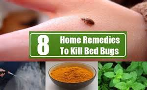 bed bug relief picture 13
