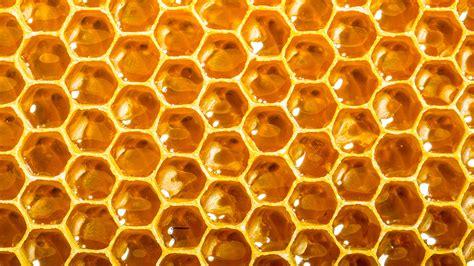 Hive picture 7