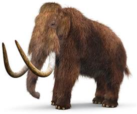 mammoth h picture 2