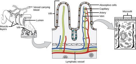 dog intestinal viruses picture 15