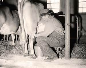 male milking picture 13