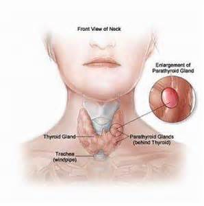 low potassium and thyroid picture 2