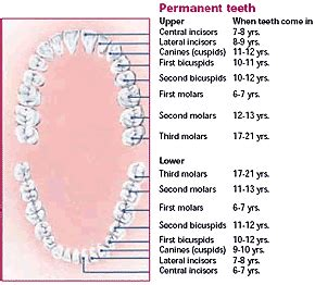 children teeth baby permanent when to pull picture 11