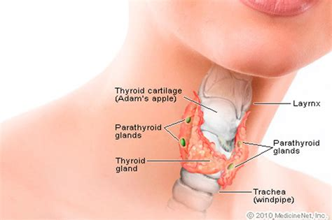 thyroid and body feeling cold picture 5