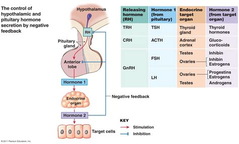 testosterone cardiac function picture 15