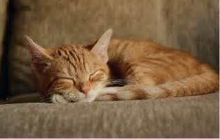 ginger sleep aid picture 3