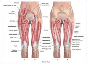 labelled diagram of a knee joint picture 11
