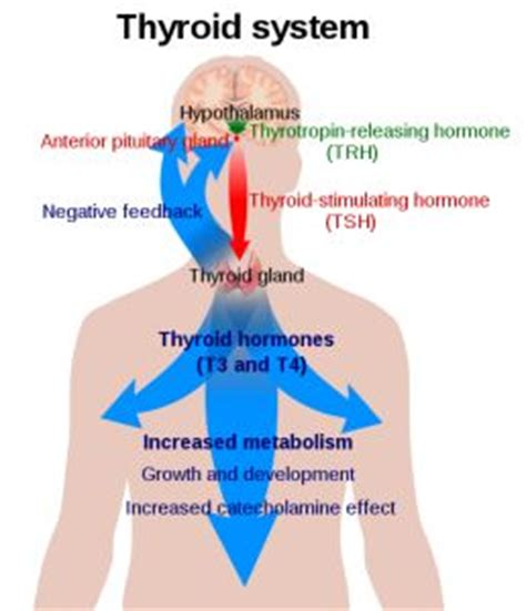 free healthy thyroid info picture 5
