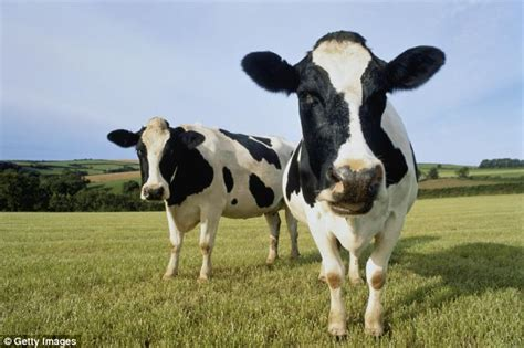 how long do you have to take bovine picture 6