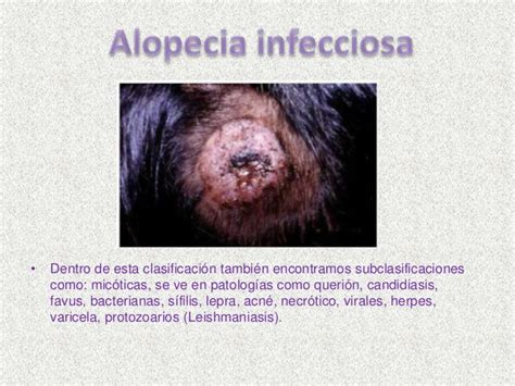 animal herpes picture 11