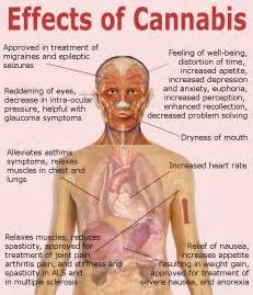 herbal drugs that have the same effect as picture 15