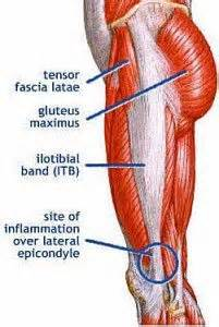 lower abdonimal muscle twitches picture 6
