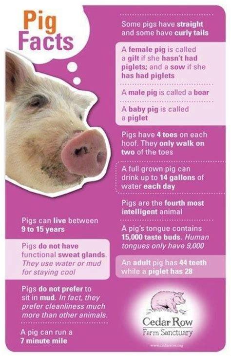 pig illness 2014 picture 13