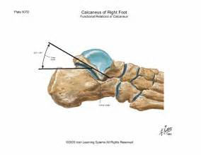 subtalar joint picture 13