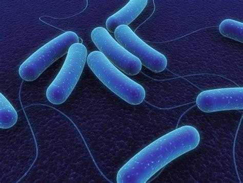 can probiotic prevent e coli picture 2