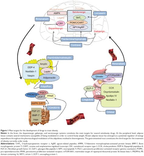 mechanism of actions of anti obesity drugs picture 11