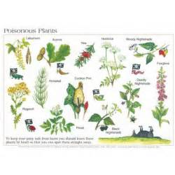 herbal poisons picture 11