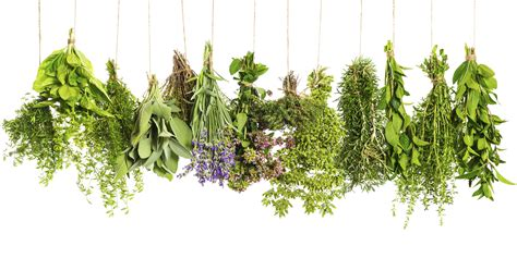 herbal recipes picture 3