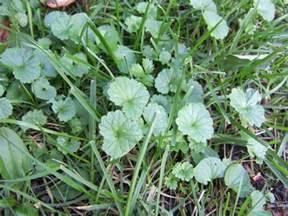 weeds picture 1