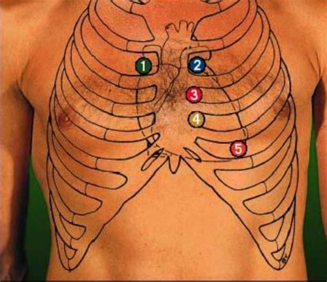 blood flow front heart picture 9