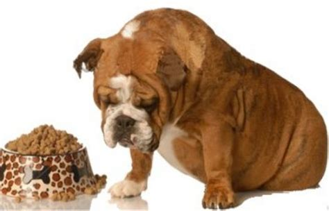 causes of canine loss of appetite picture 4