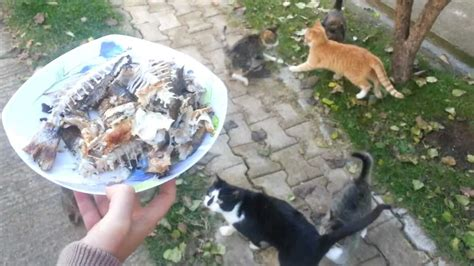 cat eating but skin and bones picture 5
