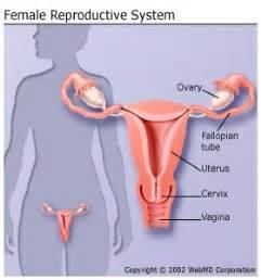 penis penetrating cervix diagram picture 5