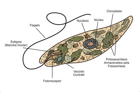 cell skin reproduction picture 14