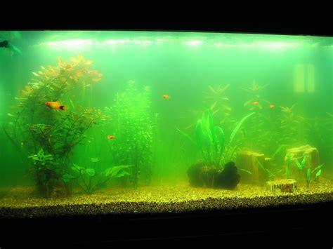 aquarium h picture 1