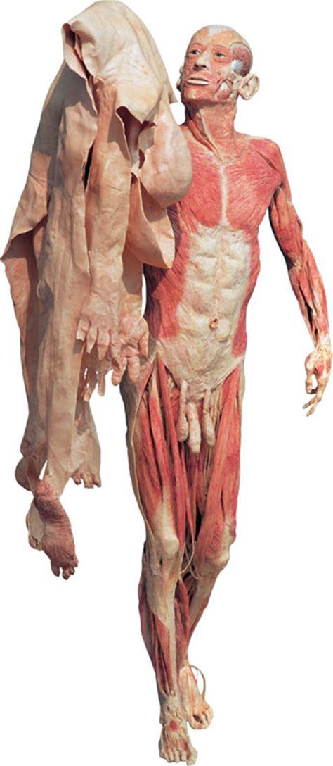 penile skin museum picture 5