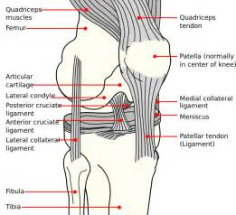 knee pain relief picture 1