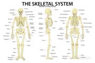 effect of methi on bones picture 6