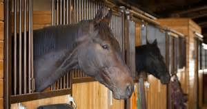business opportunity and horse stable picture 5