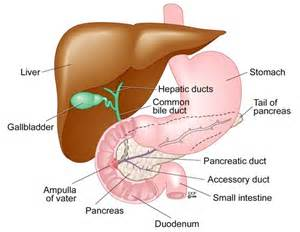 removing gall bladder picture 11