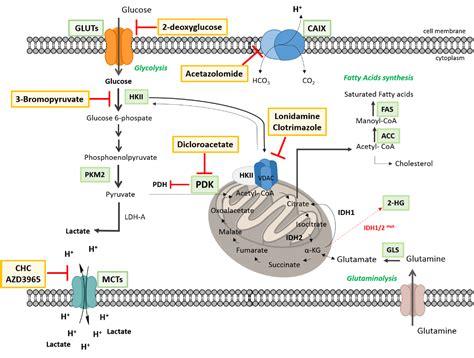 circulation probiotic picture 10