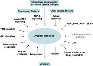 aging process picture 18