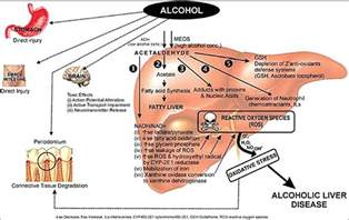 how long are metabolites held in the liver picture 9