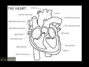 blood flow song picture 6