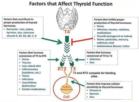hypothyroid affect on heart picture 6