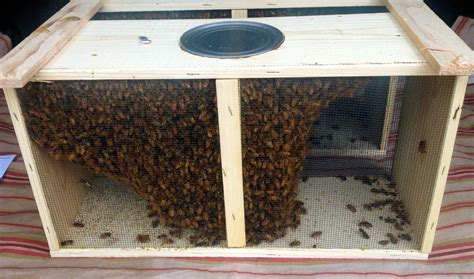 Honey bee hives picture 1