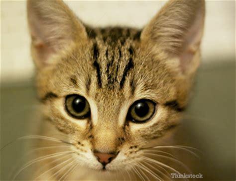 feline picture 14