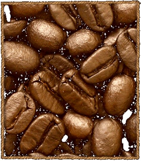 where to buy green coffe robust from uganda picture 6