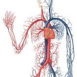 how to increase blood flow to genitails picture 21