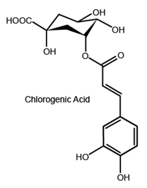 chlorogenic picture 3