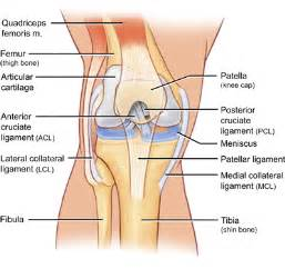 diagram of knee joint plavic band picture 4
