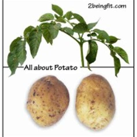 fenugreek uses for the fat picture 3