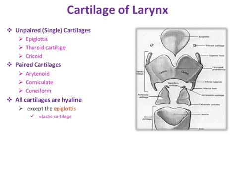 coughing and the thyroid picture 6