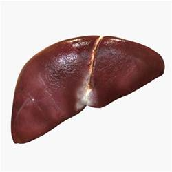 a picture of a real human liver picture 1