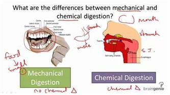 mechanical digestion picture 2